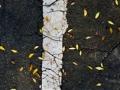 T leaf, Alphabet, 2014