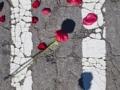U rose, Alphabet, 2014